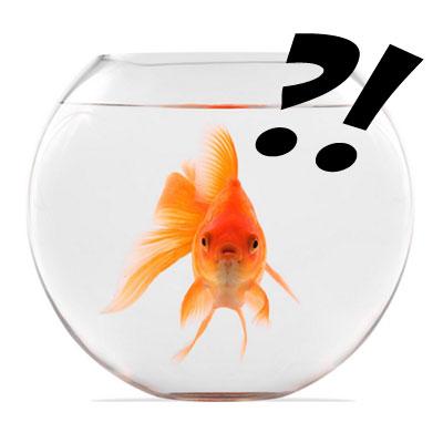 Strange Wine Laws – Goldfish Bingo
