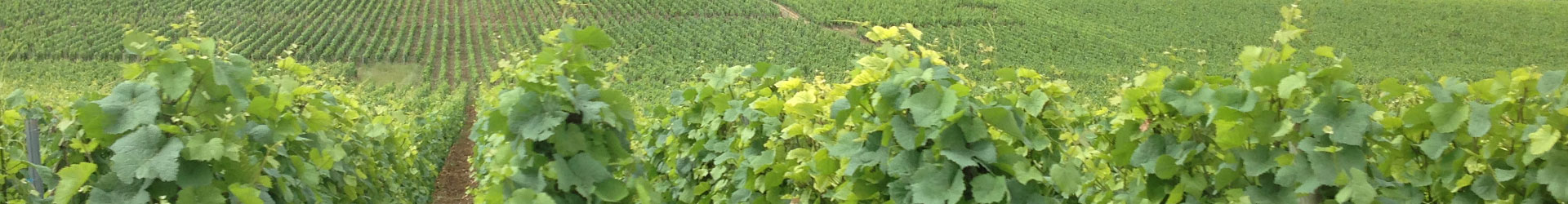 Wine Stories [Part 5] – Champagne Stories